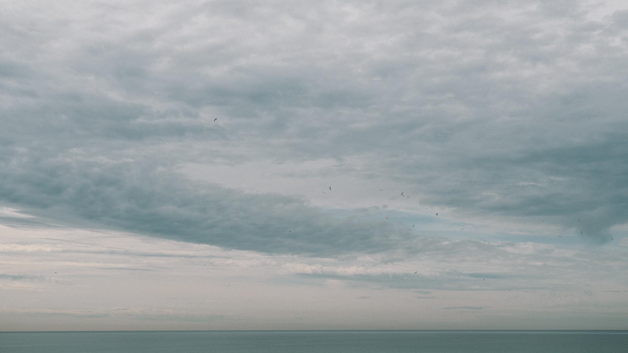 Flock over the Ocean