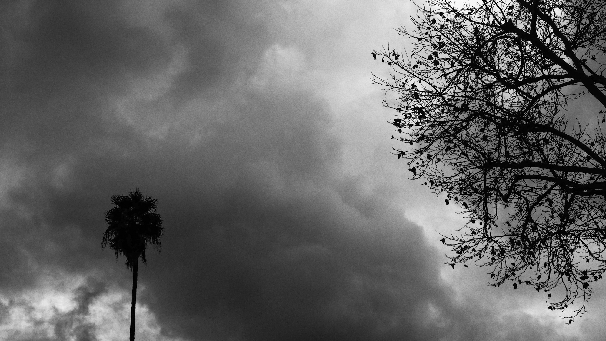 Two Trees on a Cloudy Day