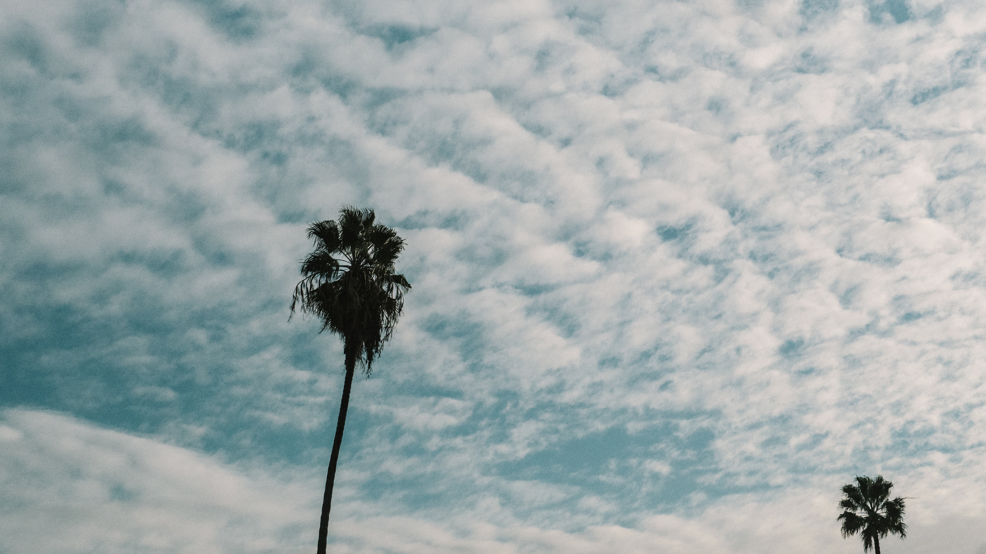 Two Palms and Clouds