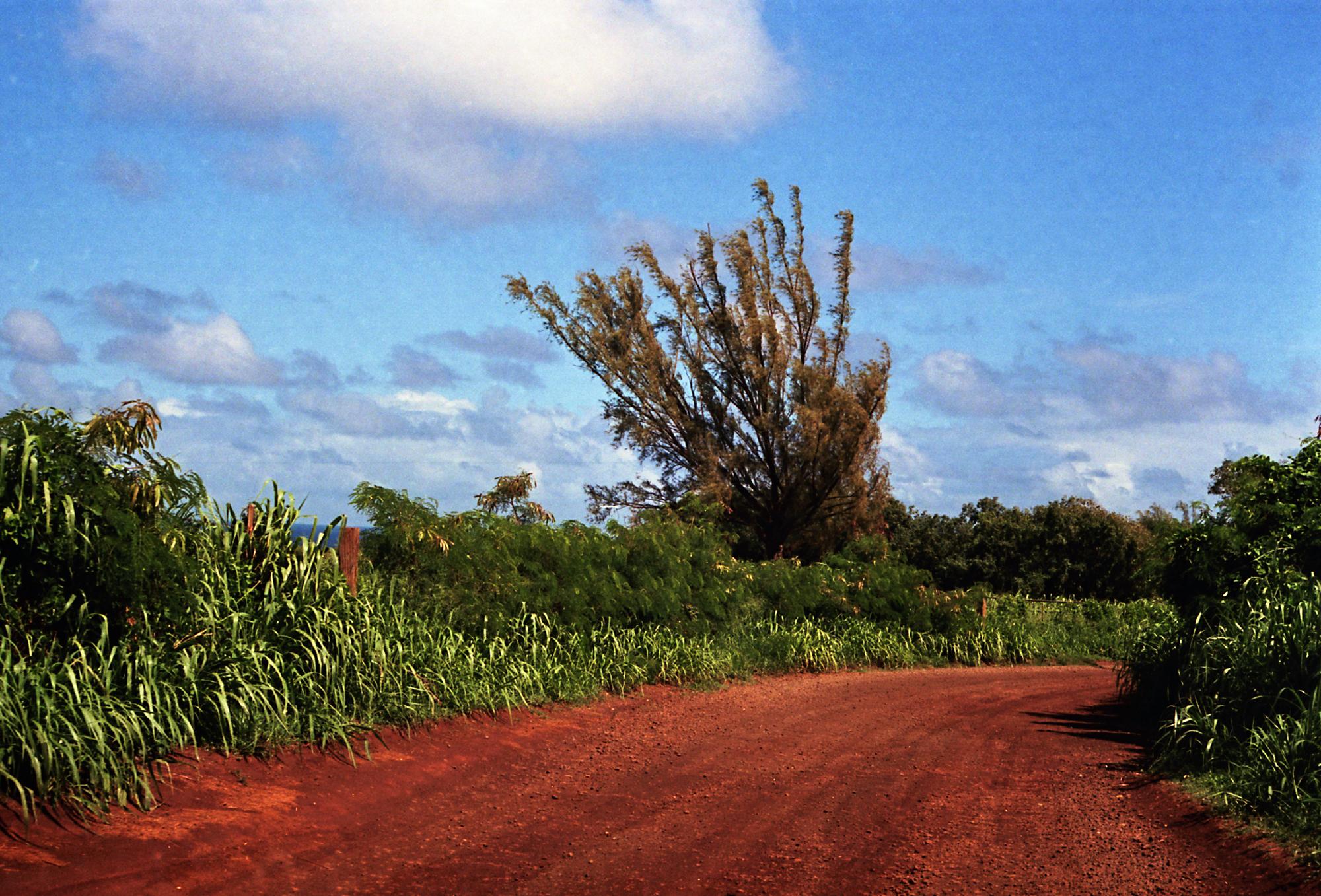 Dirt Road to Larsen's Beach