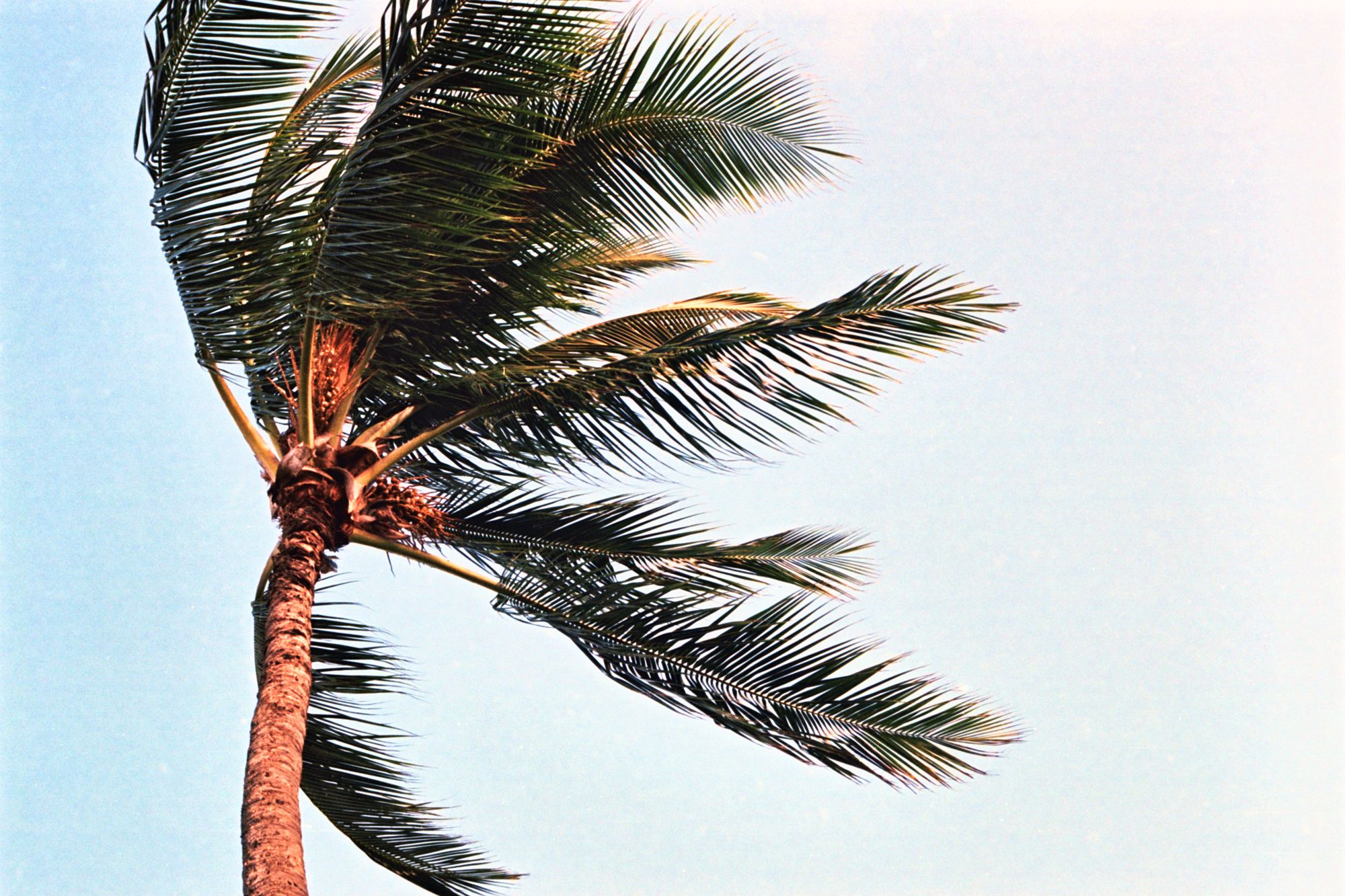 Wind and Palm