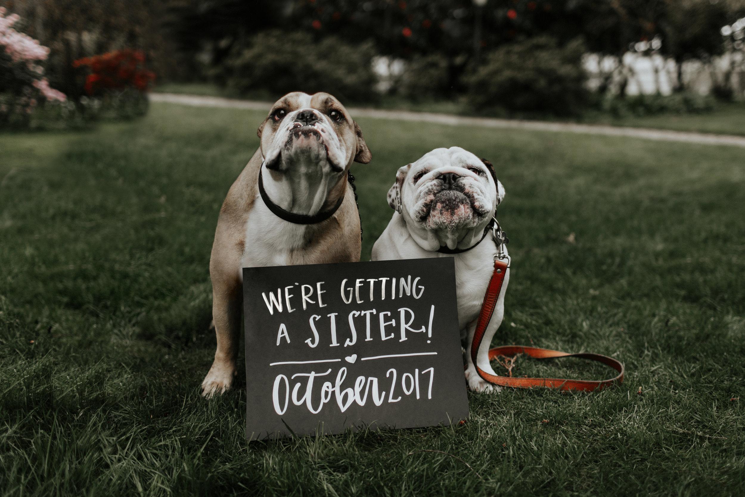 ginapaulson_courtney_maternityannouncement-28.jpg
