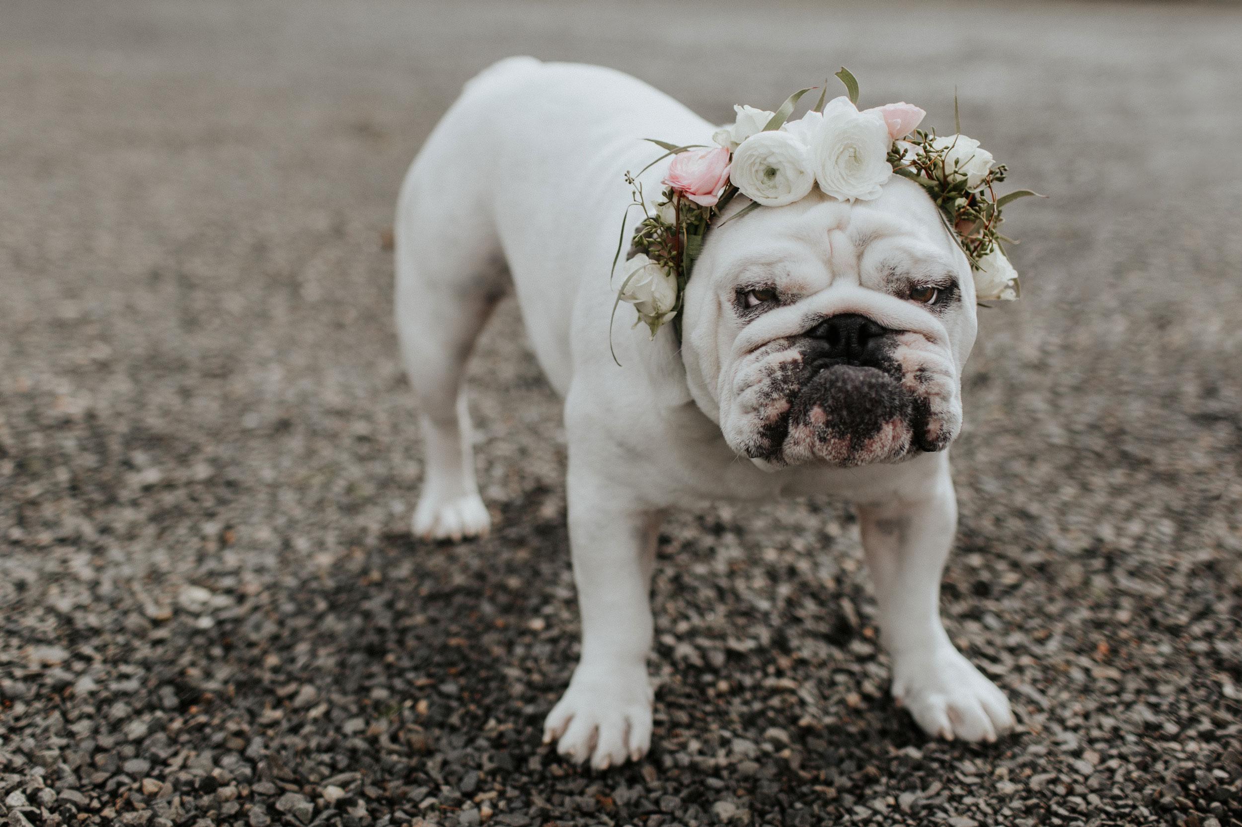 ginapaulson_courtney_dogflowercrown-1.jpg