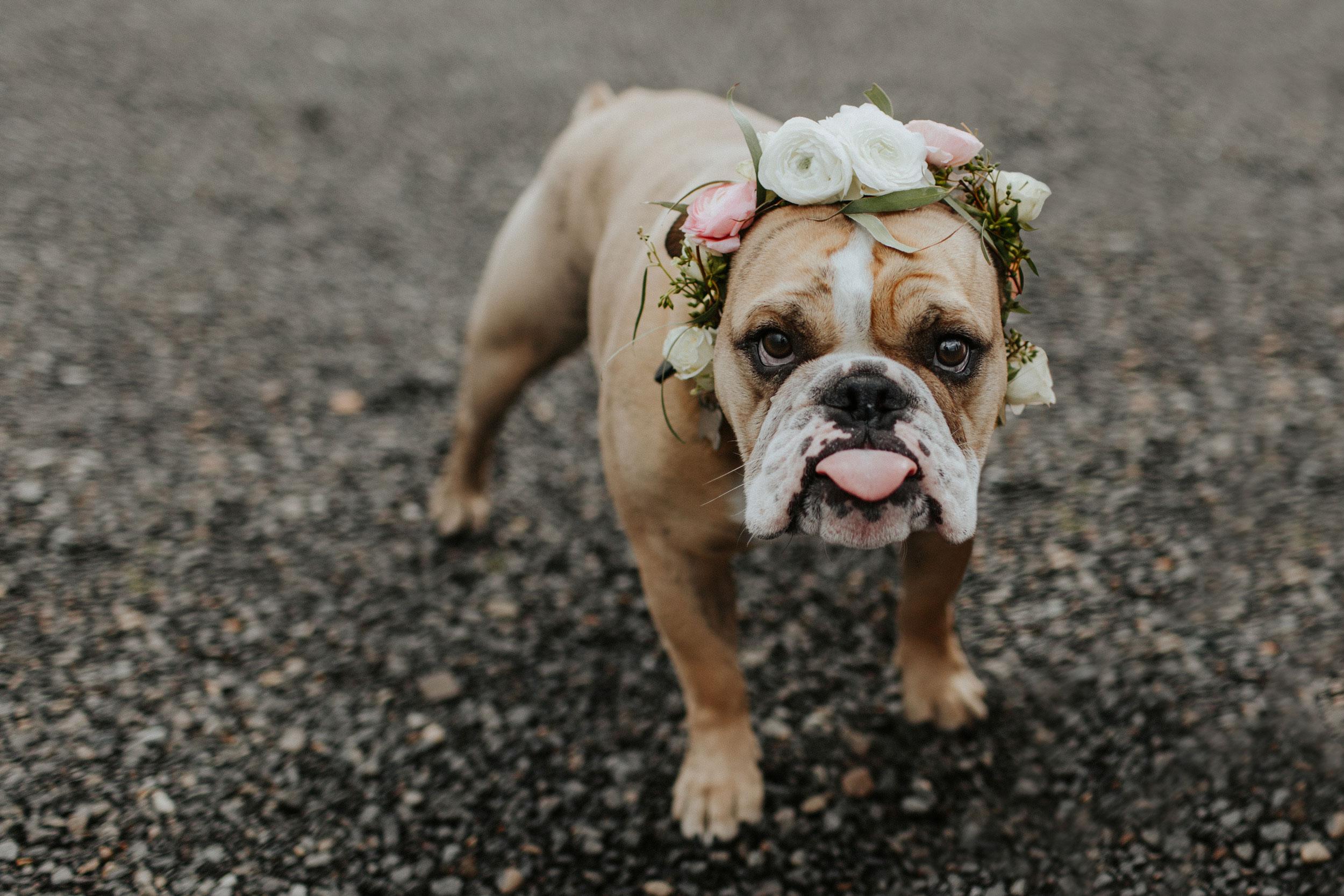 ginapaulson_courtney_dogflowercrown-2.jpg