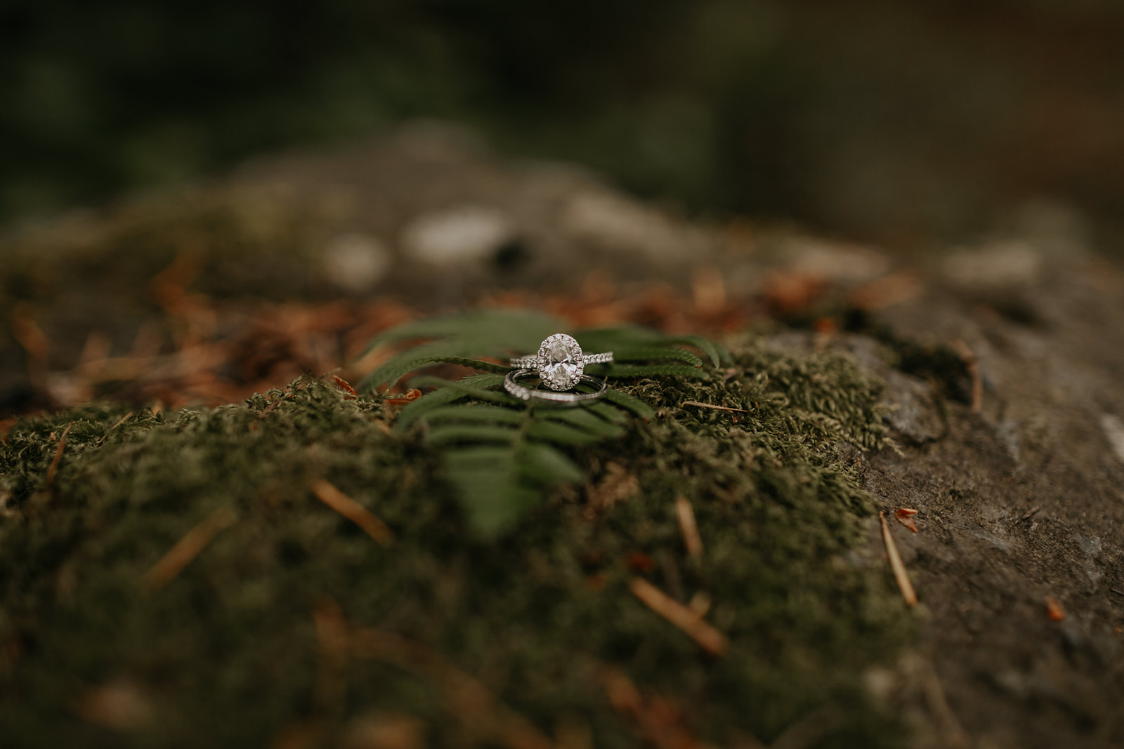 ginapaulson_shannonandbrandonwedding-13.jpg