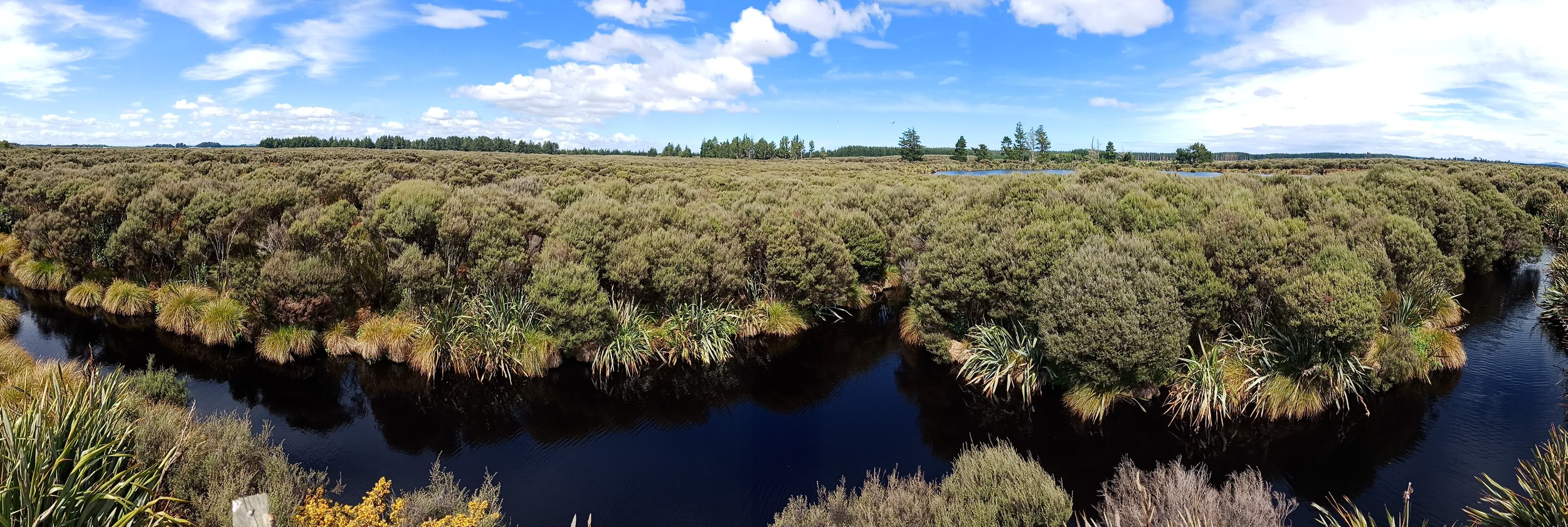 Restoring wetlands through reverse engineering. Here a drainage ditch has been dammed to allow water to reclaim the wetlands and associated plants — tussock, flax and a wide variety of native trees. photo credit: the most amazing marion familton