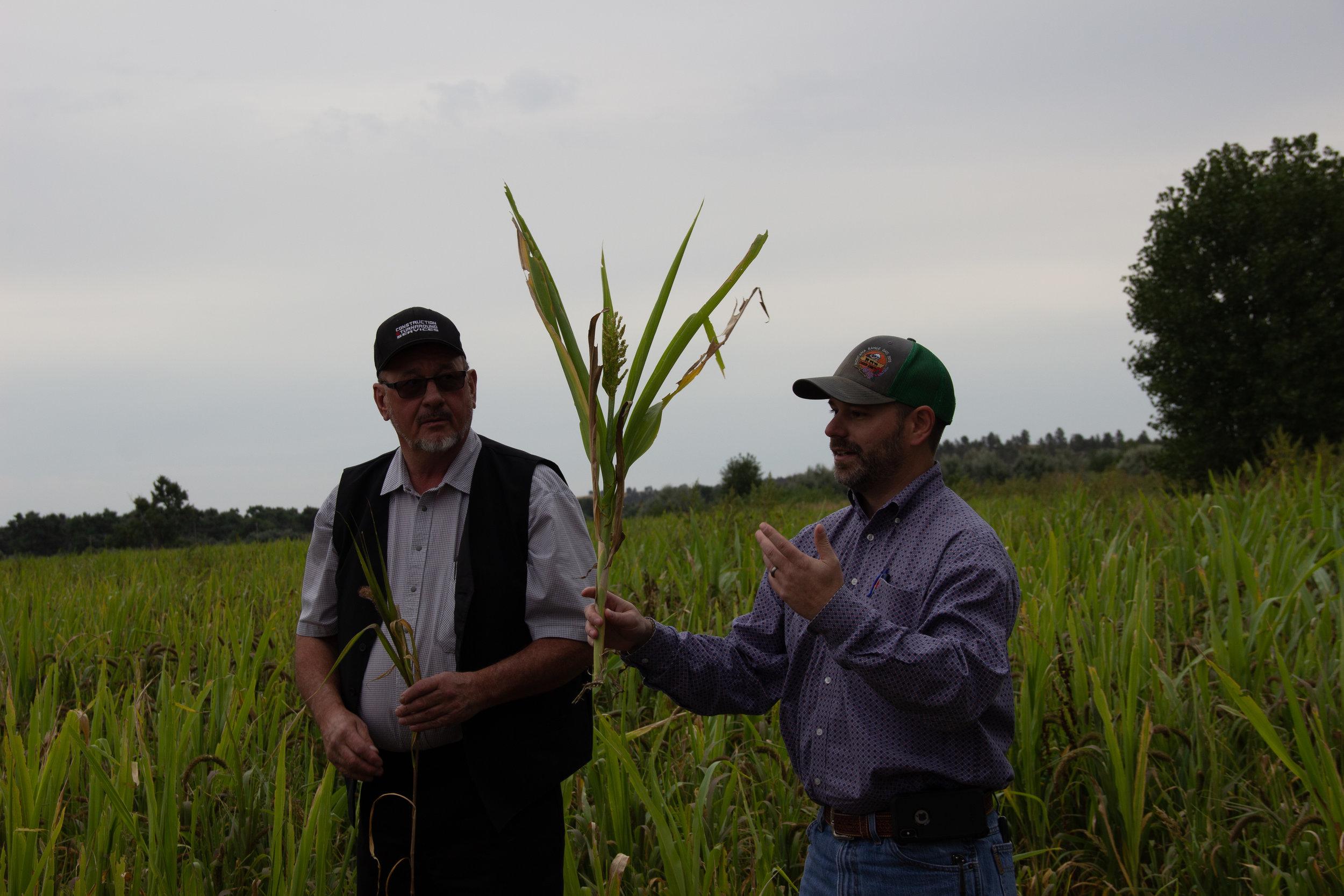 Rehabilitating cropland