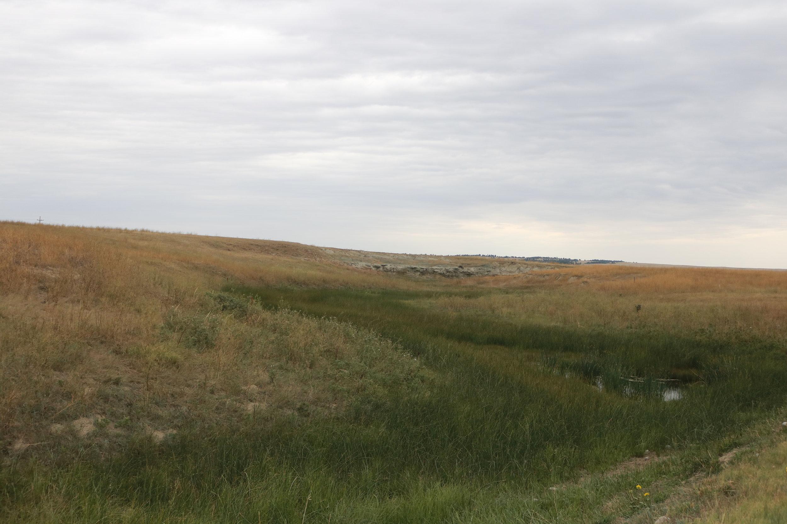 Wetland resilience