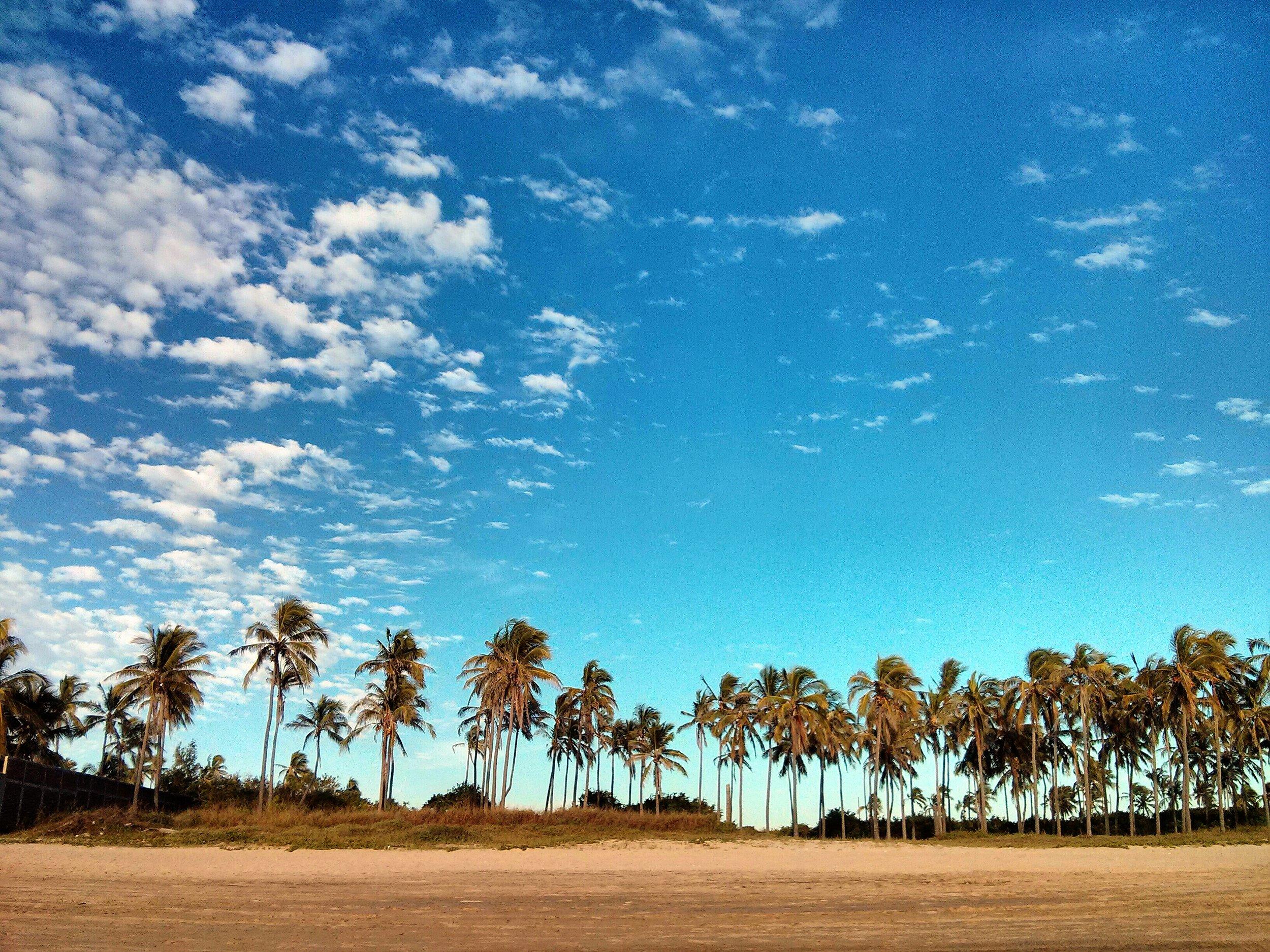 Palmas Playa Cerritos Looney Bean