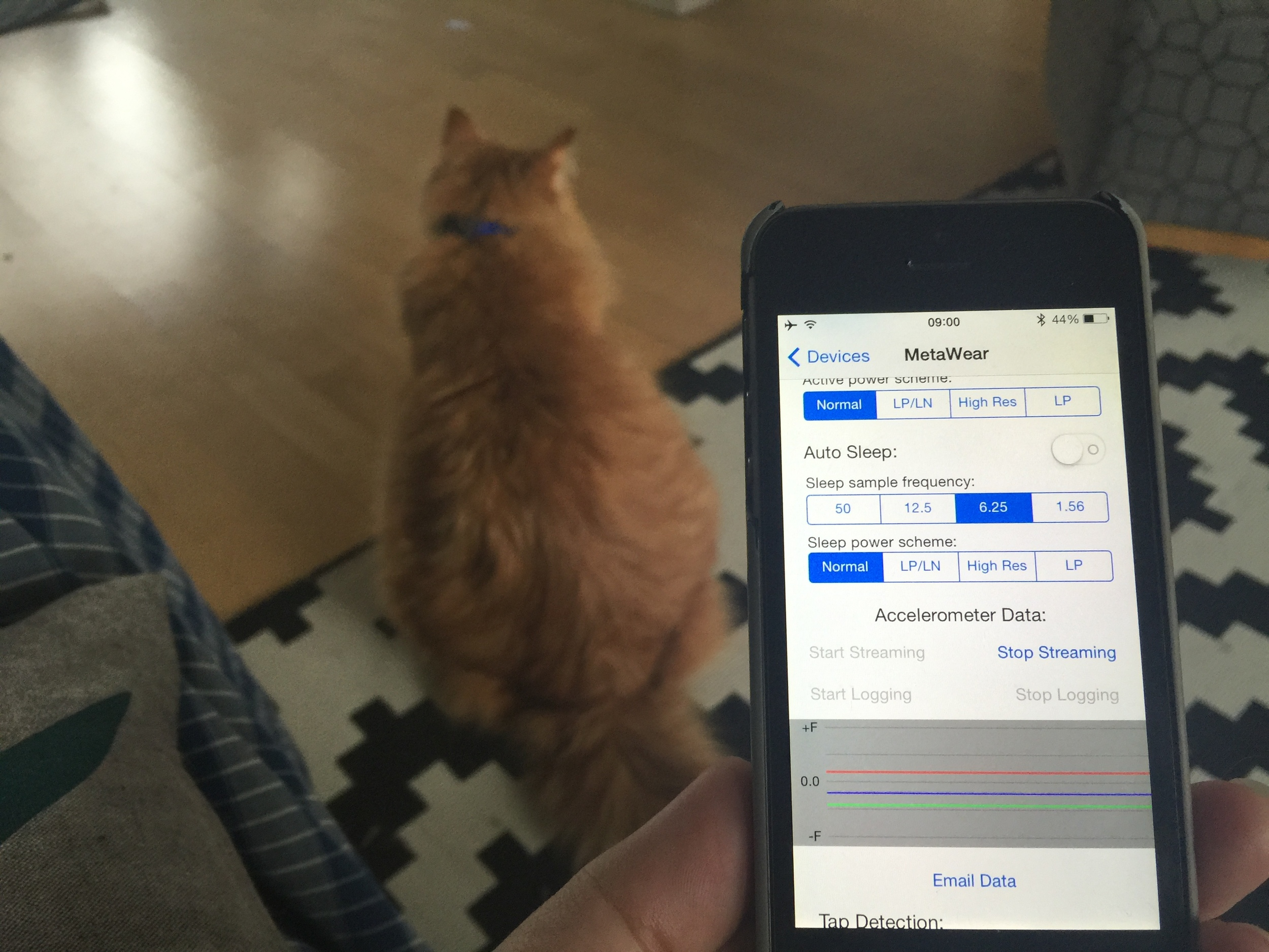 """Internet of Cats"" prototyping"