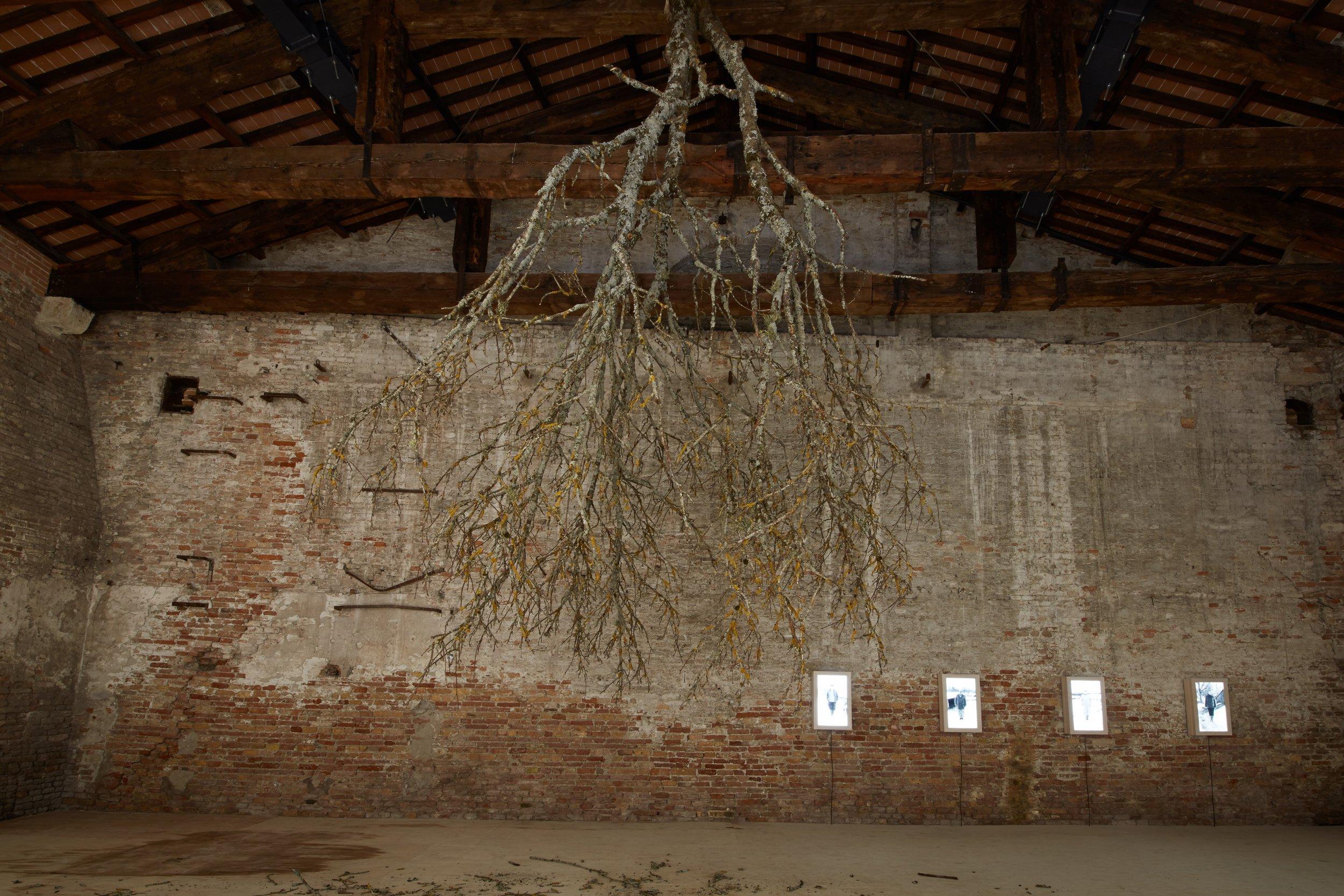 Latvian Pavilion by Kriss Salmanis and Kapsars Podnieks.Venice Biennale 2013. Photo Valts Kleins.