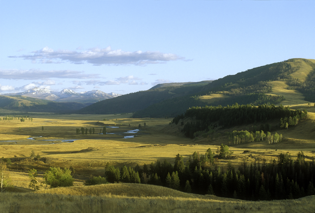 Yellowstone's Lamar Valley in early fall. (Photo Tom Murphy.)