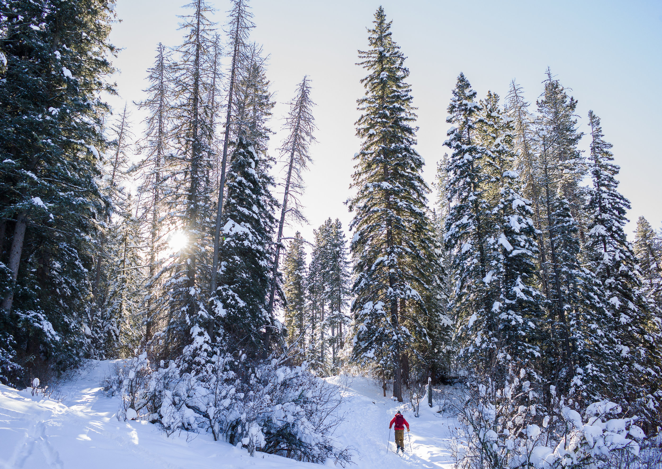 Snowshoeing through the snowy Custer Gallatin National Forest in Montana. (Photo Louise Johns.)