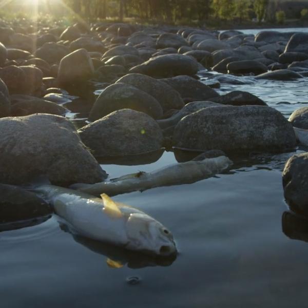 Photo: Ocean Media Institute