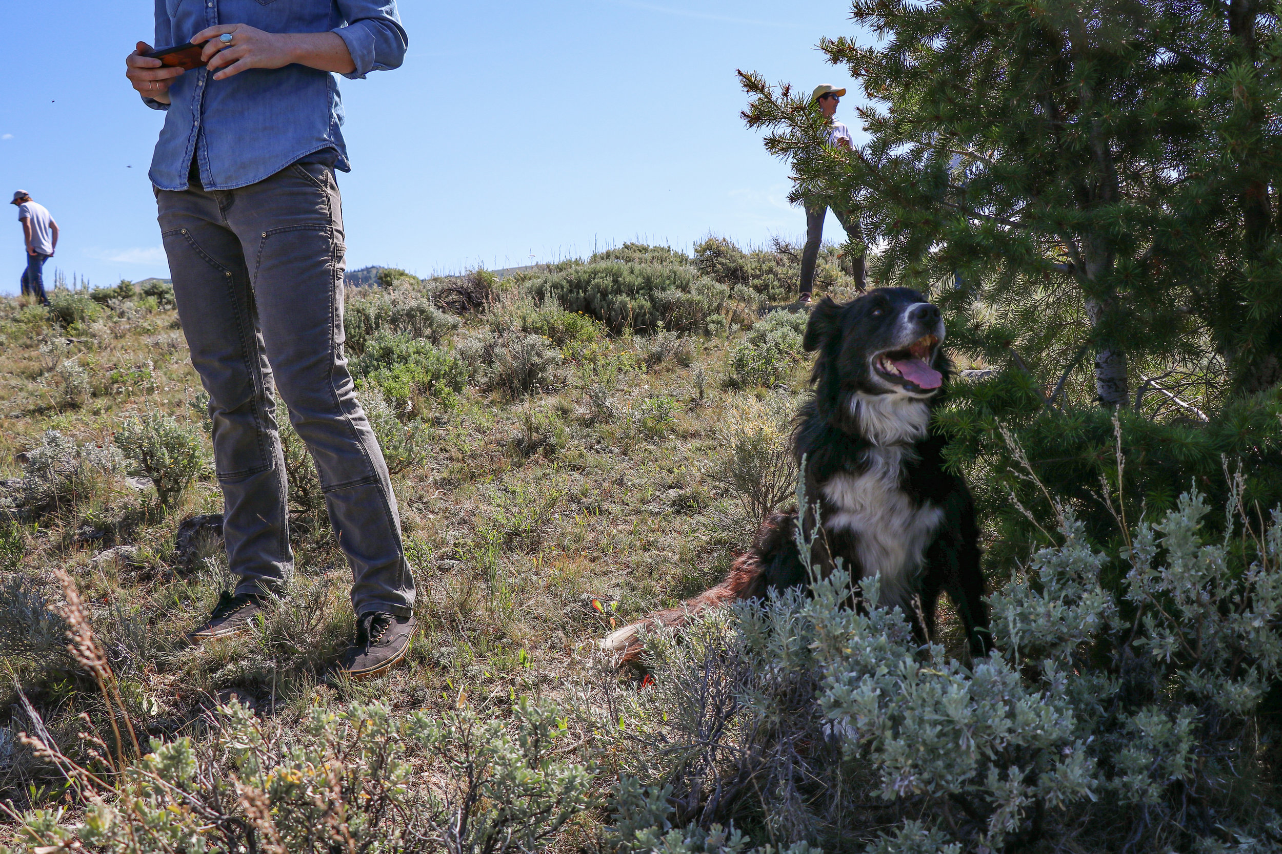 A canine friend finds some shade during the 2019 Ruby Valley Strategic Alliance field trip.  (Photo GYC/Emmy Reed.)