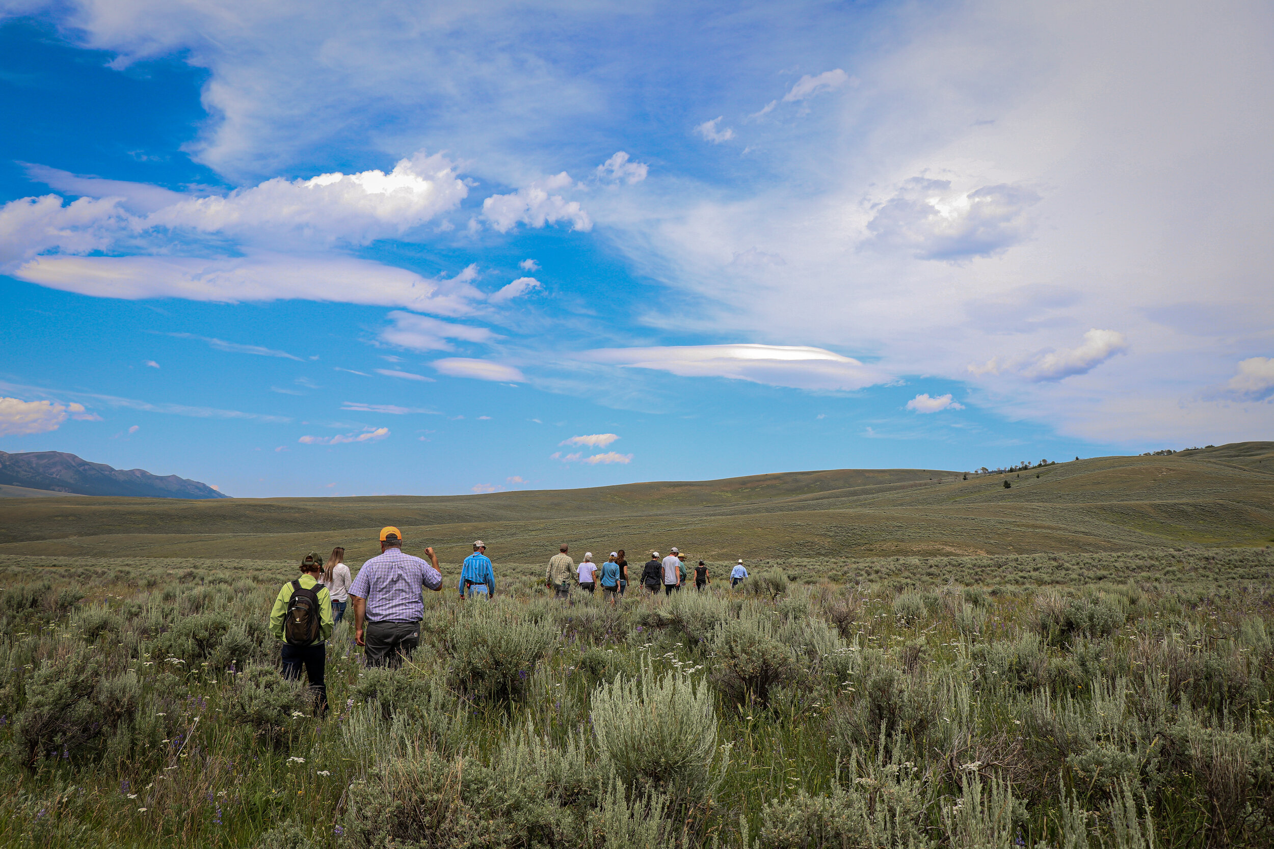 The 2019 Ruby Valley Field Tour heads out into the field. (Photo GYC/Emmy Reed.)