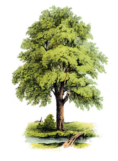 treewithbrook small
