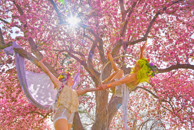 Fairy-Tale-Blossoms-Faeries_Carly-Carpenter.jpg