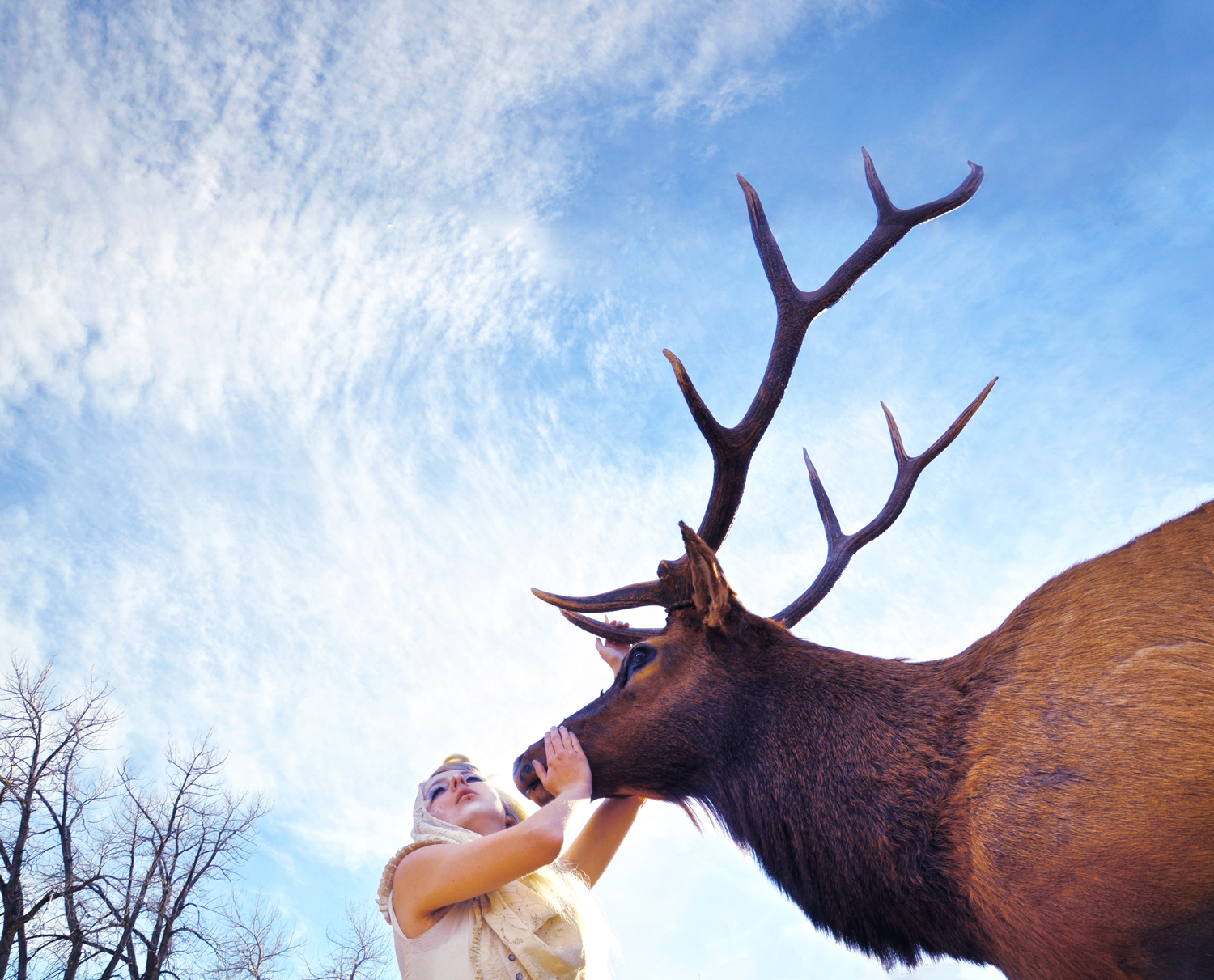 Chiaroscuro-Light-Elk_Carly-Carpenter.jpg