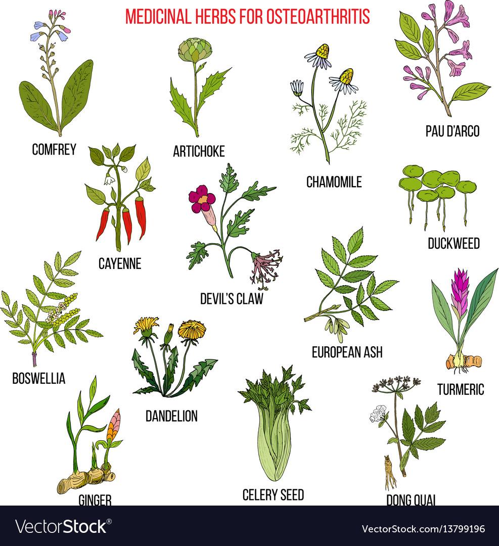 best-medicinal-herbs.jpg