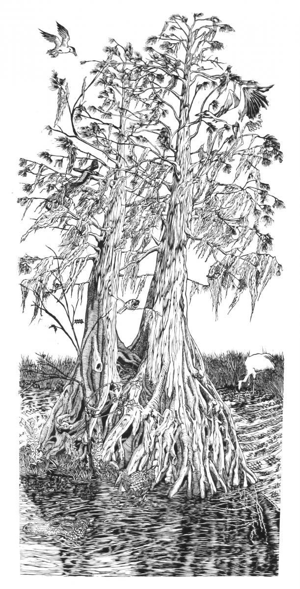 cypress-I-front3.jpg