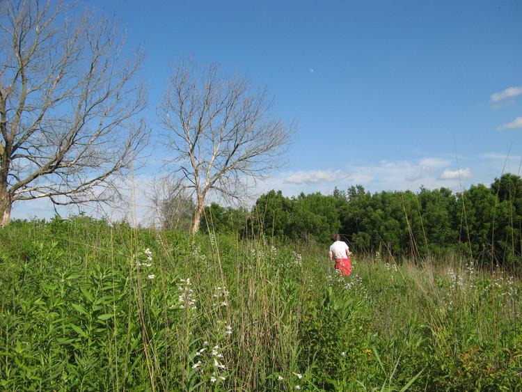 Deb inspecting her prairie restoration.