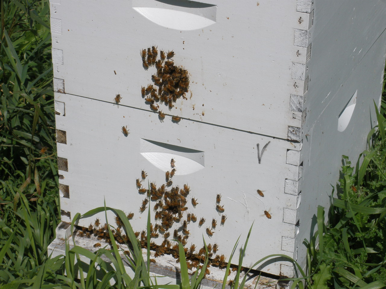 7d 7b bee hives.JPG