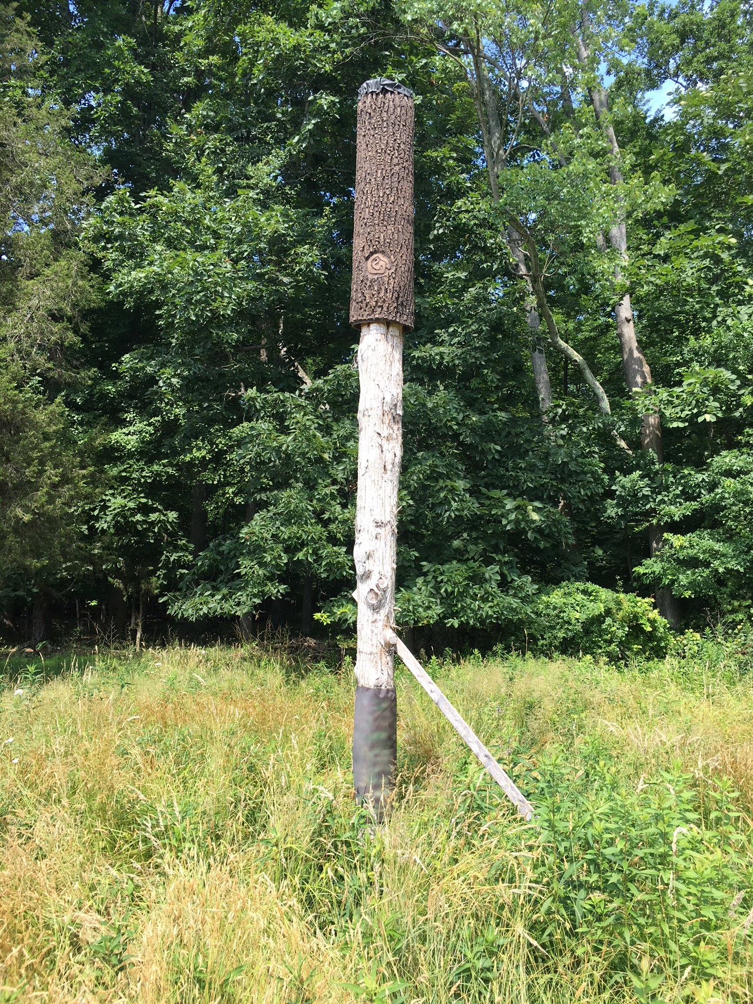 An occupied bat box at Magnolia's Pennsylvania mitigation complex
