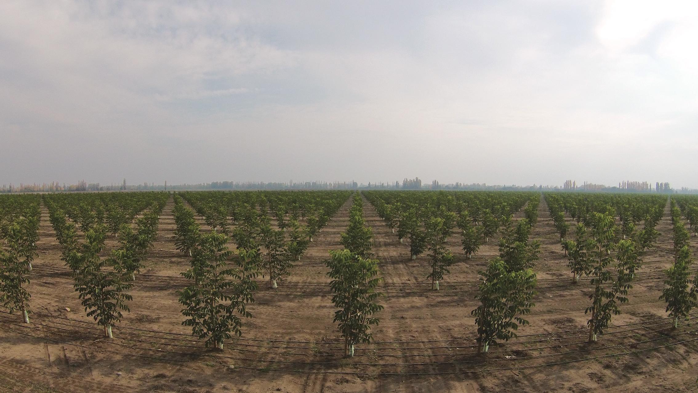 (1) Plantacion de Nogales - LOFdrone.jpg