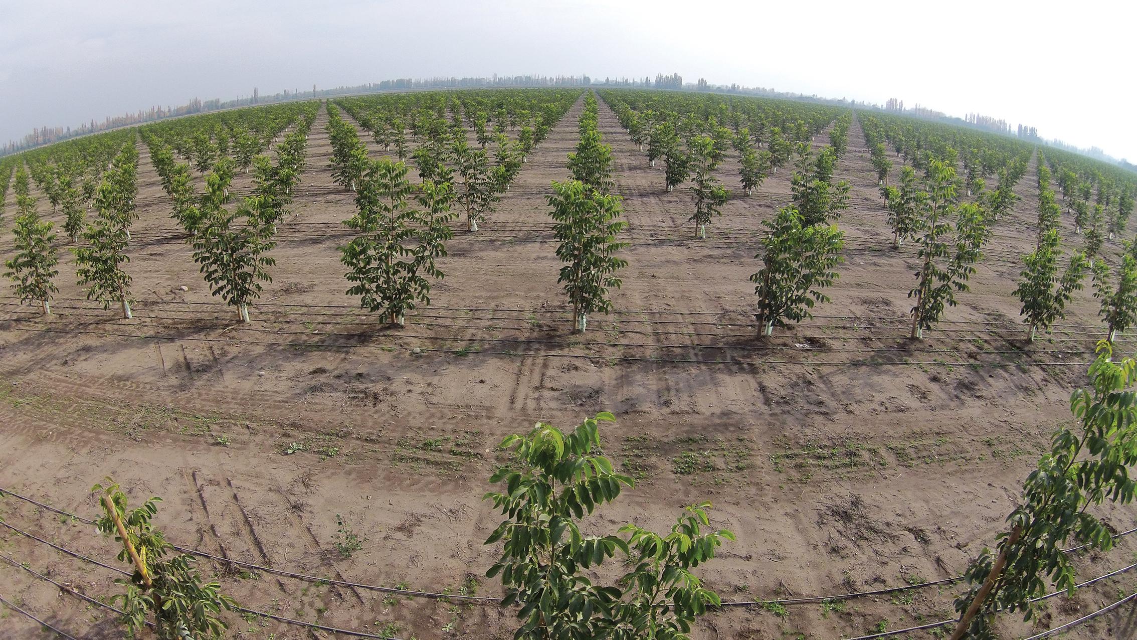 (2) Plantacion de Nogales - LOFdrone.jpg