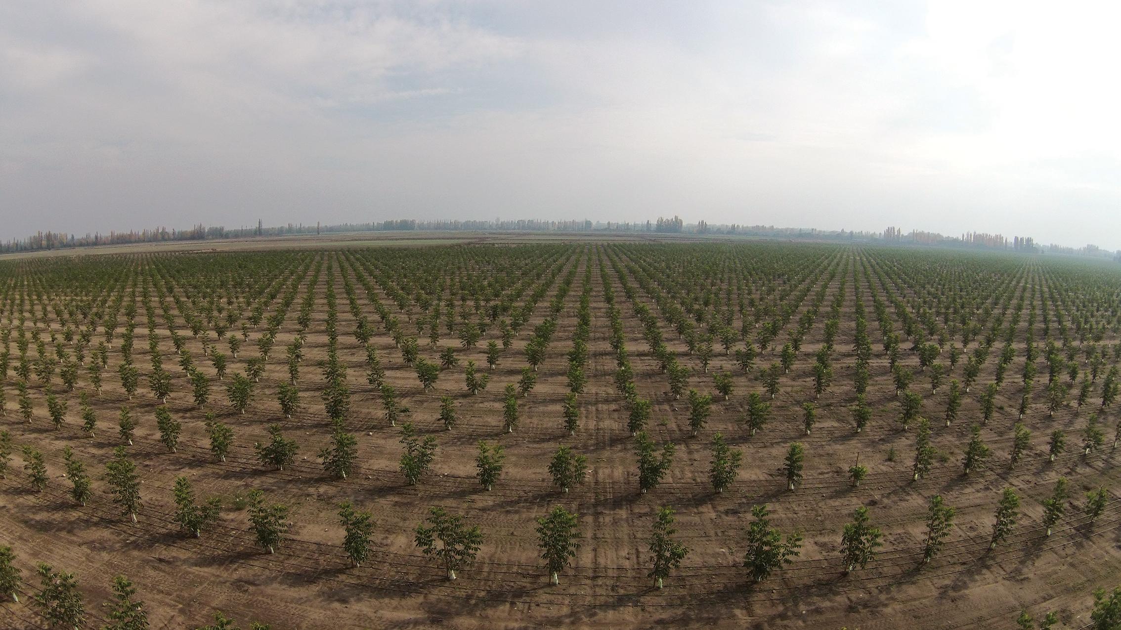 (3) Plantacion de Nogales - LOFdrone.jpg