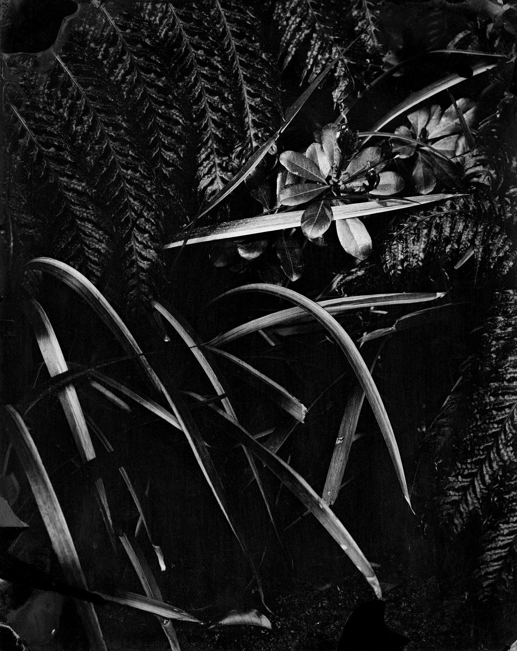 """(1) Jardín Negro 1: Ambrotipo 8x10"""" (2014)  © Fernanda Larraín"""