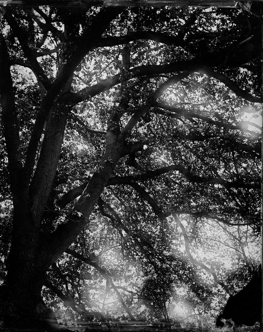 """(2)   Jardín     Negro 2: Ambrotipo    8x10""""  (2015) © Fernanda Larraín"""