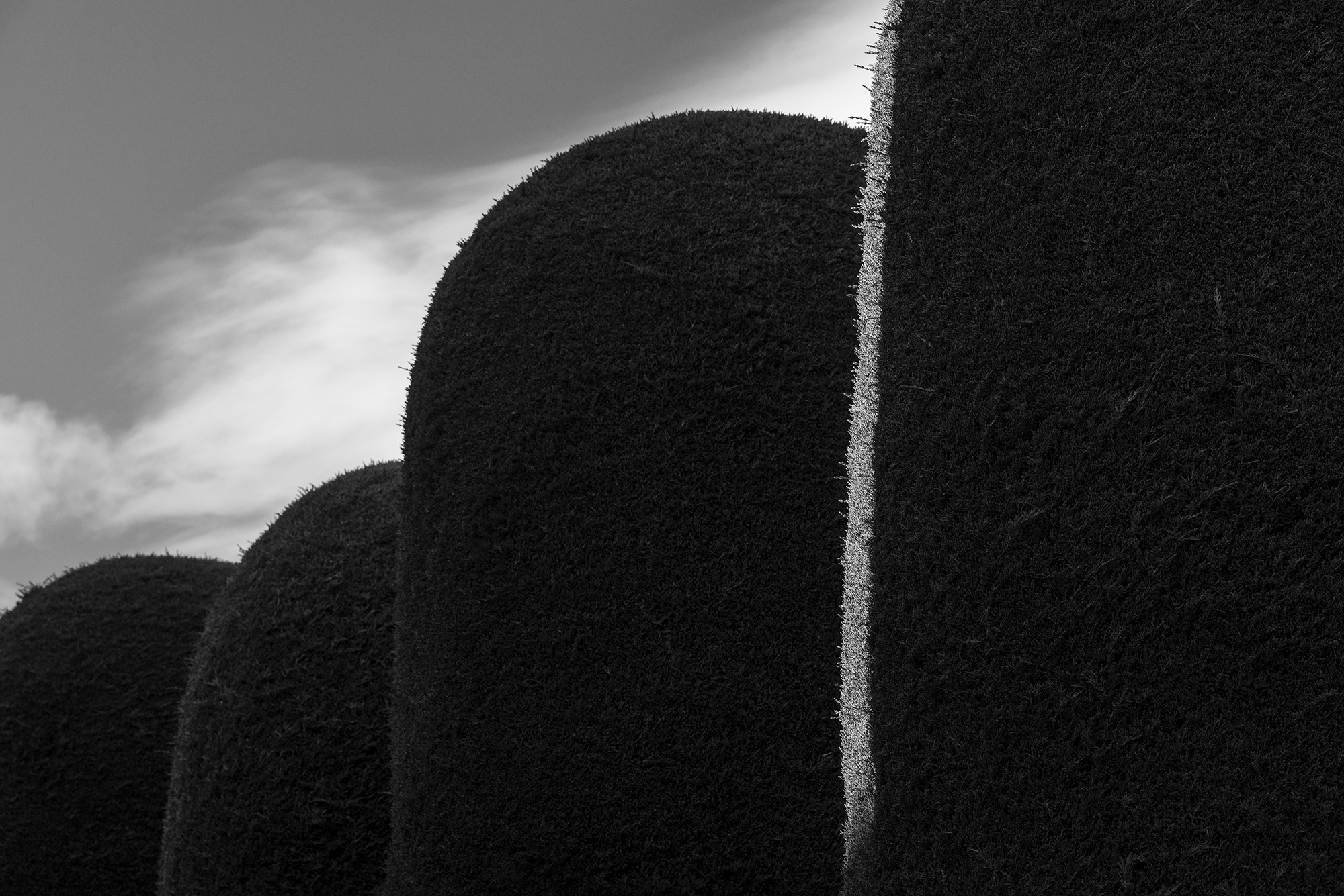 (10) Cementerio Punta Arenas @ Pablo Valenzuela para LOFscapes.jpg