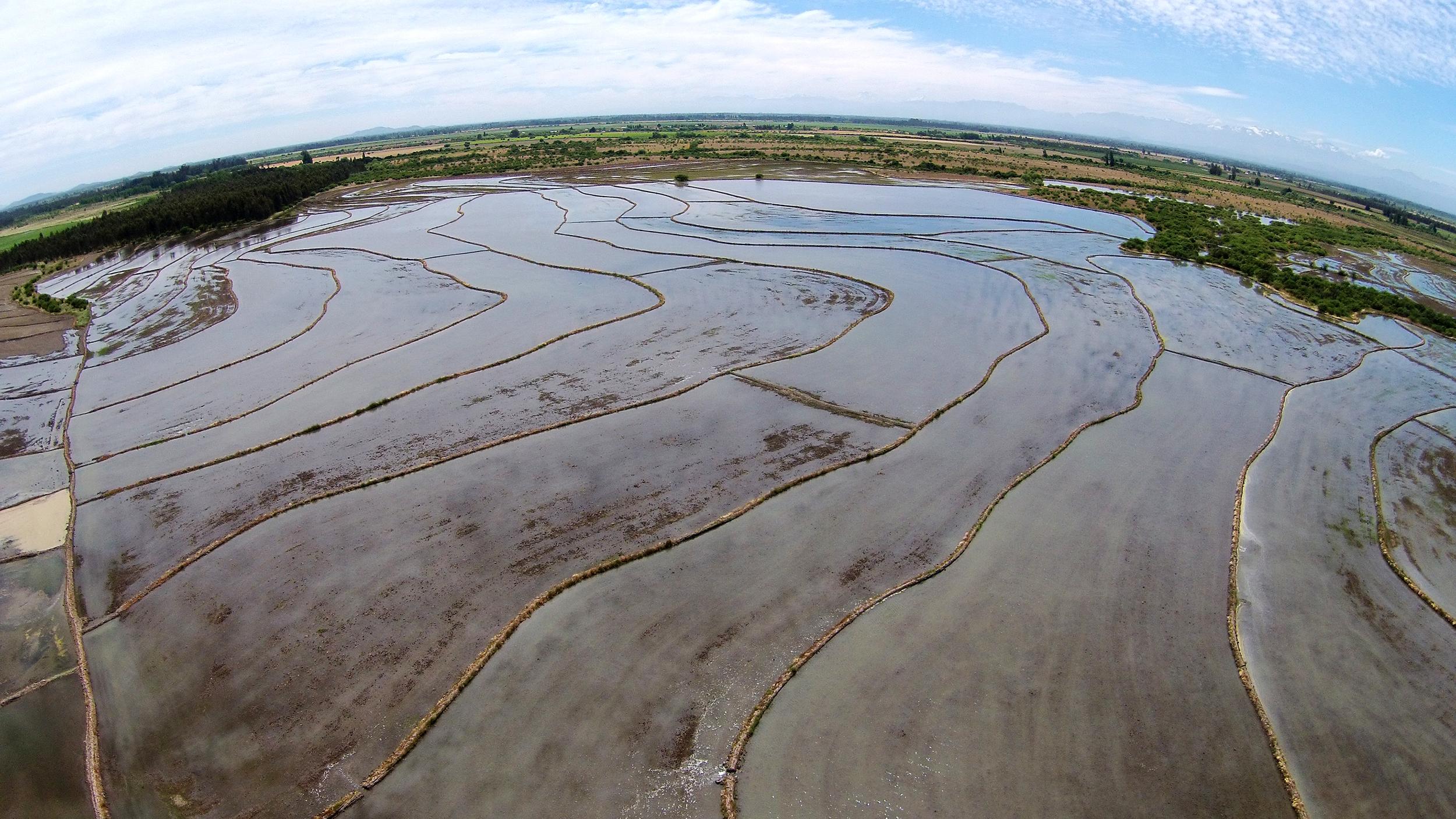(3) Plantación de Arroz · Retiro, Chile © LOF·drone para  LOFscapes