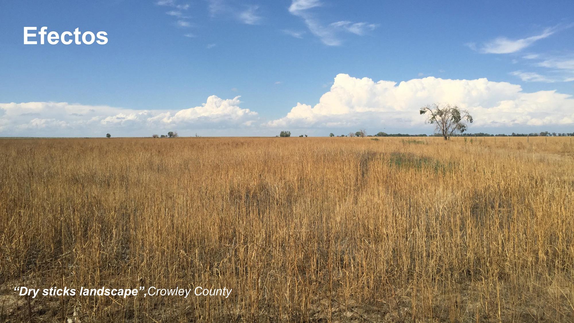 (3)-Efectos-del-Buy-and-Dry-en-el-paisaje-agrícola-©-Flavio-Sciaraffia-M.-para-LOFscapes.jpg
