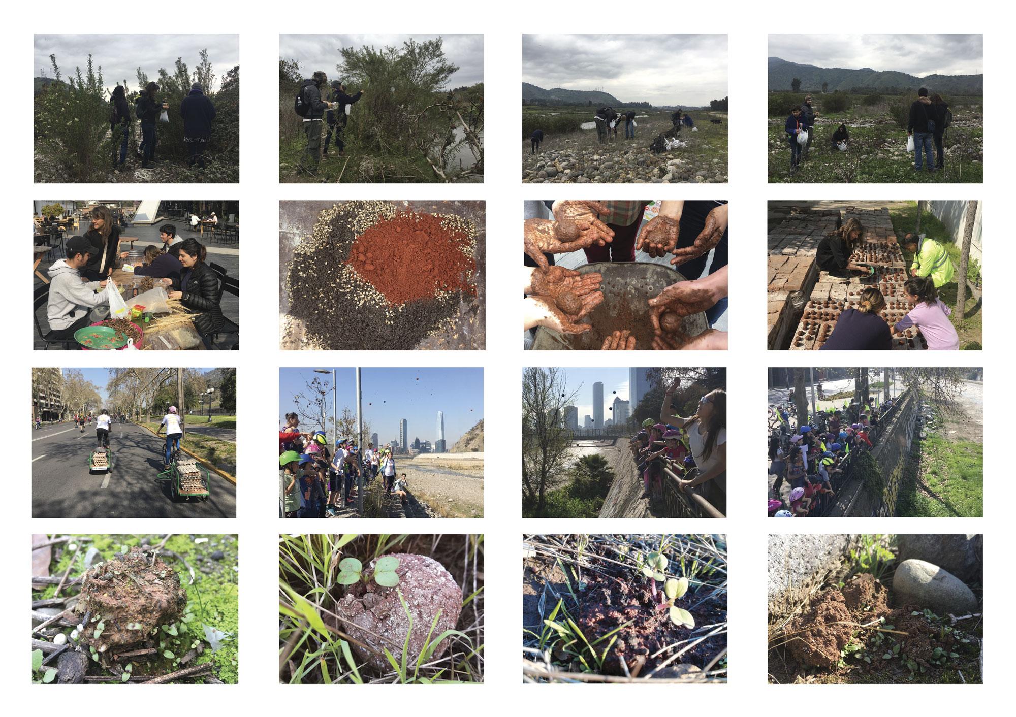 (2) Collage etapas del proceso + germinación bombas de semillas © Paisaje Táctico para LOFscapes.