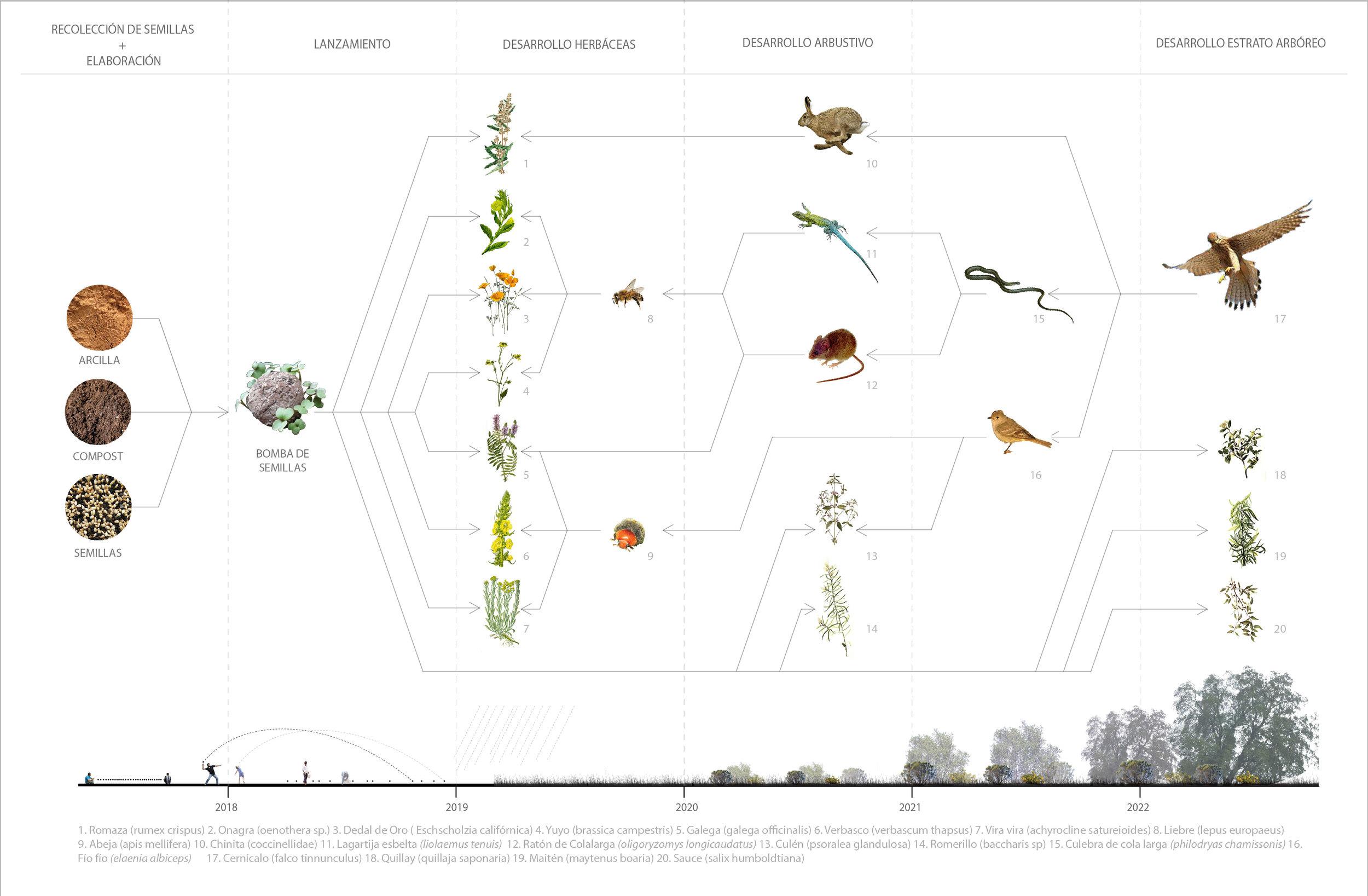 (1) Diagrama activación ecológica Río Mapocho © Paisaje Táctico paraLOFscapes.