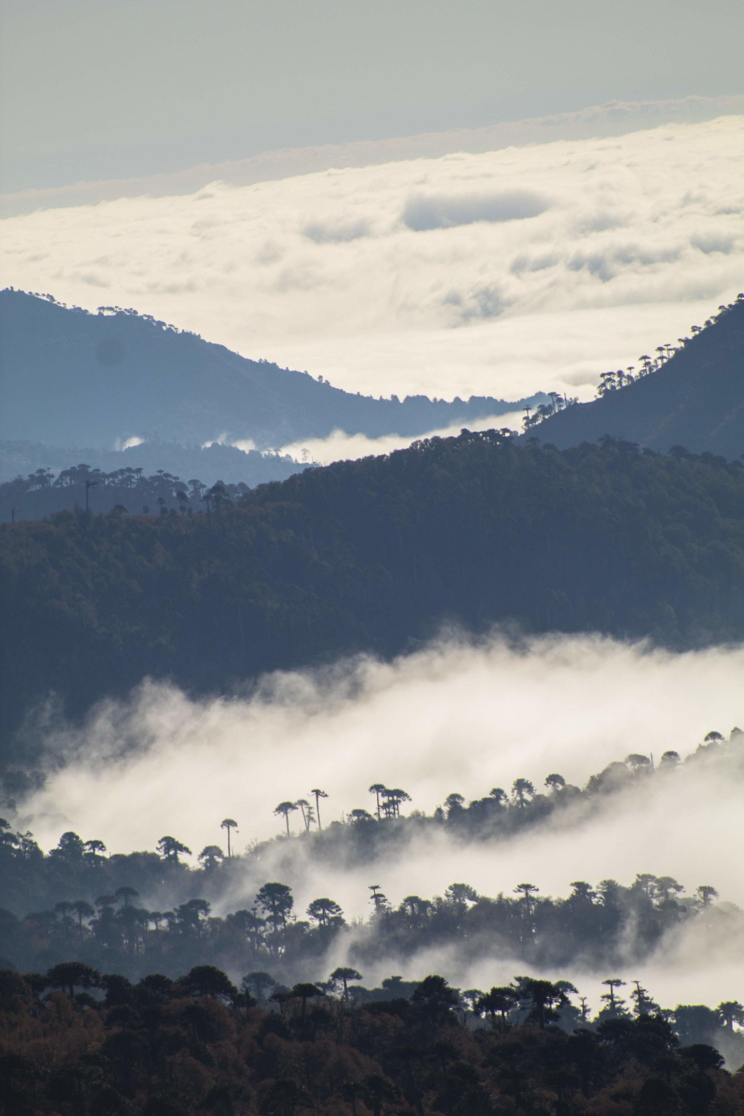 (9) Reserva Nacional Villarrica © Ignacio Castro U. para LOFscapes.