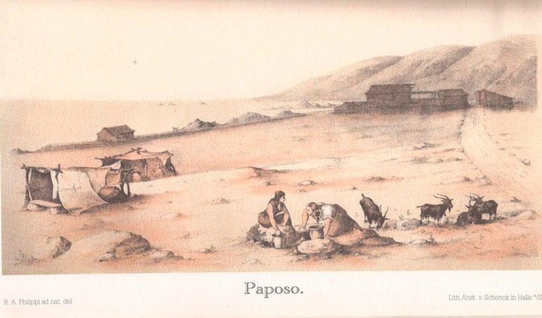 (4) Rodulfo Phillipi,  Paposo  (1850) publicado  Viage al Desierto de Atacama  (Halle en Sajonia: Librería de Eduardo Anton, 1860) en www.memoriachilena.cl