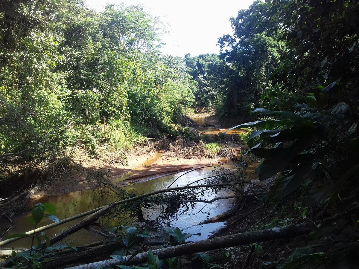 (2) Vegetación presente en el área © Luis Flores M. para  LOFscapes