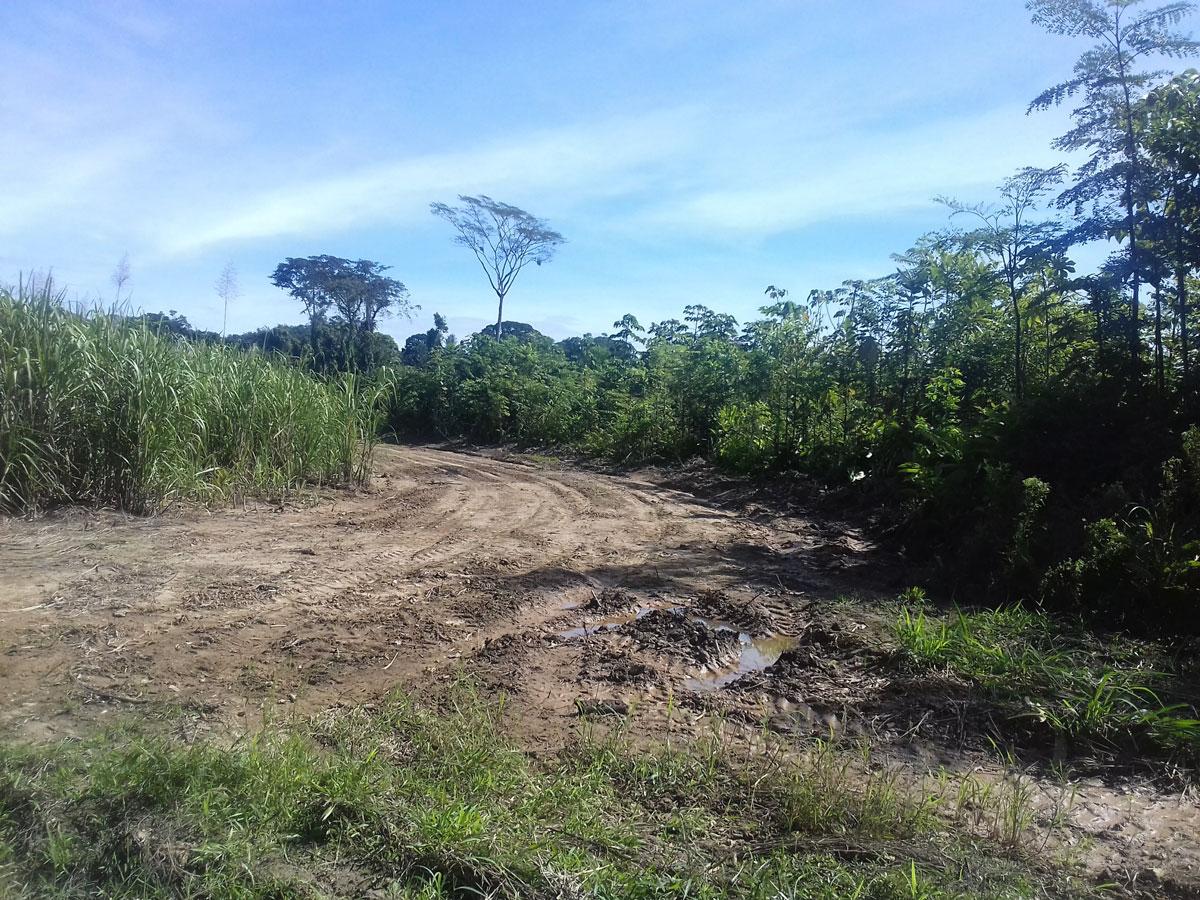 (3) Vegetación presente en el área © Luis Flores M. para  LOFscapes