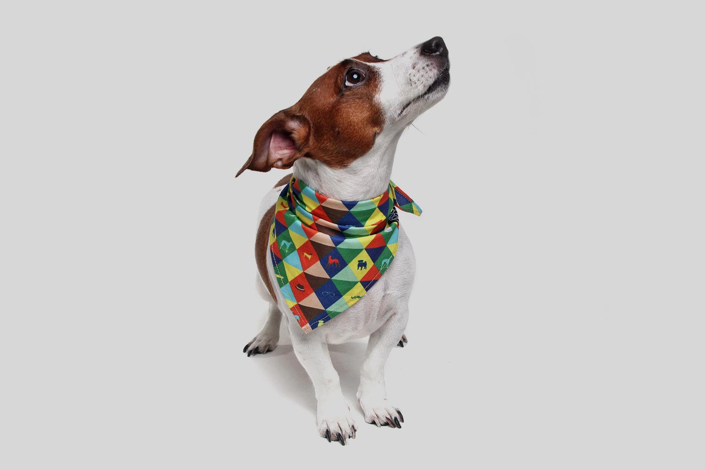 Dog model