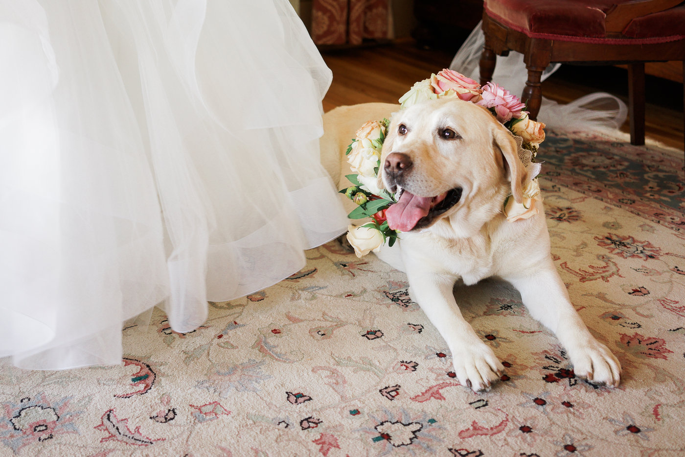 Barr Mansion wedding with floral dog collars