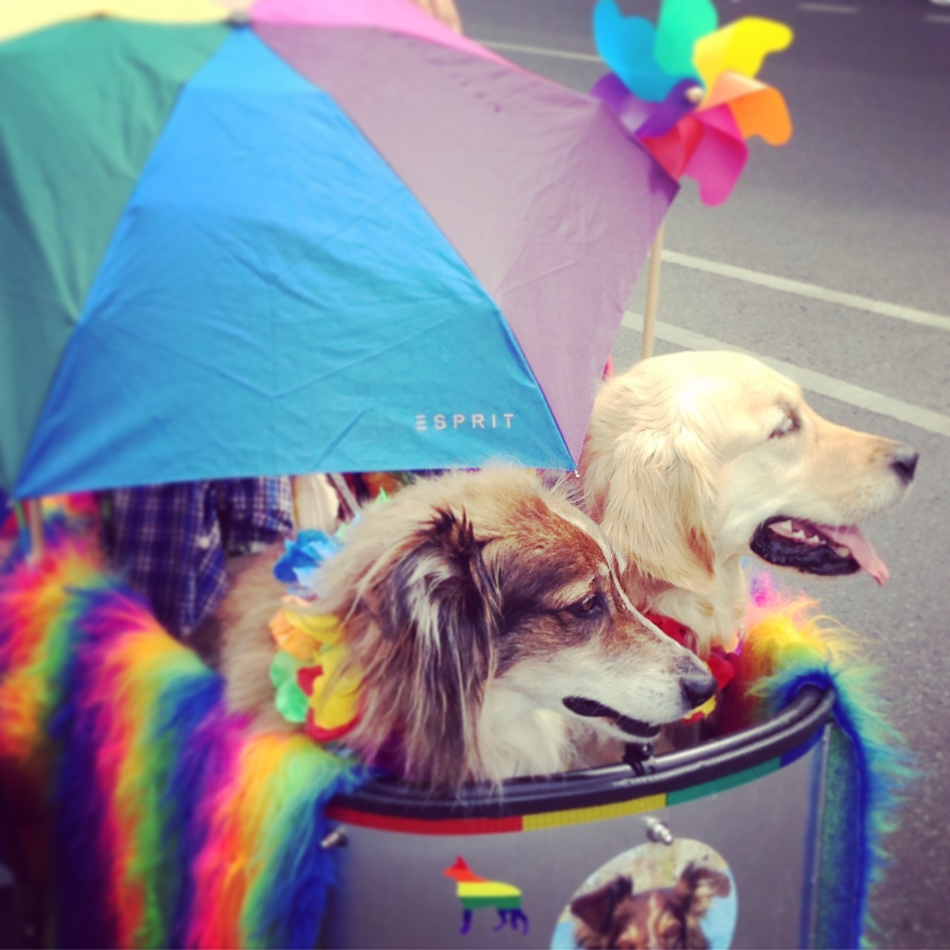 Dog Pride