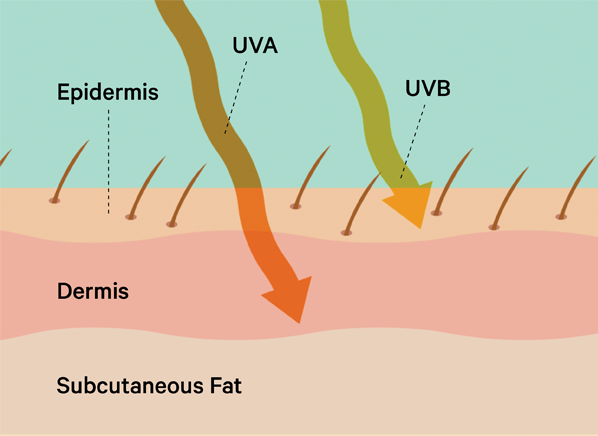 CRM_Page_40_UVA_UVB_Rays_07-15.png