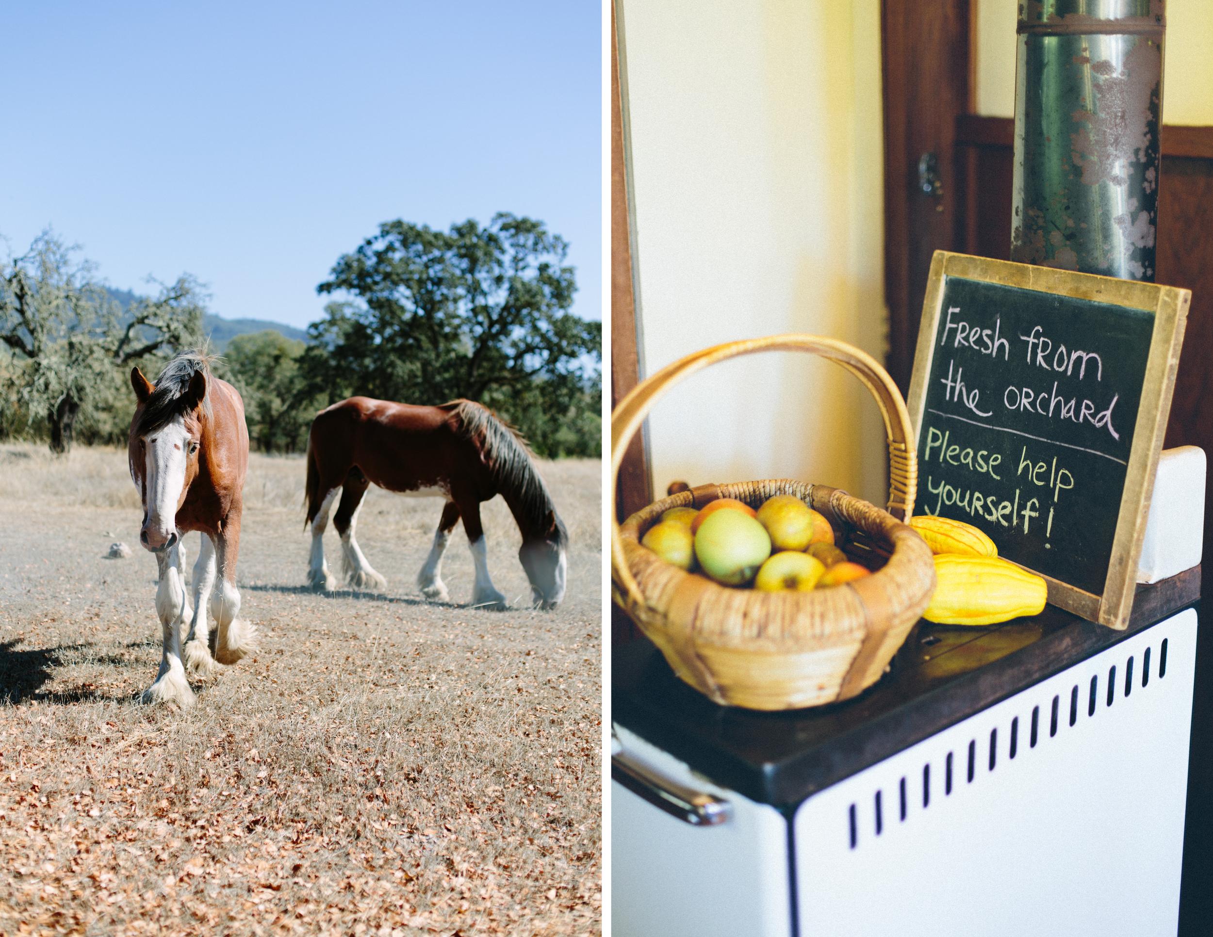 beltane ranch vow renewal 1.jpg