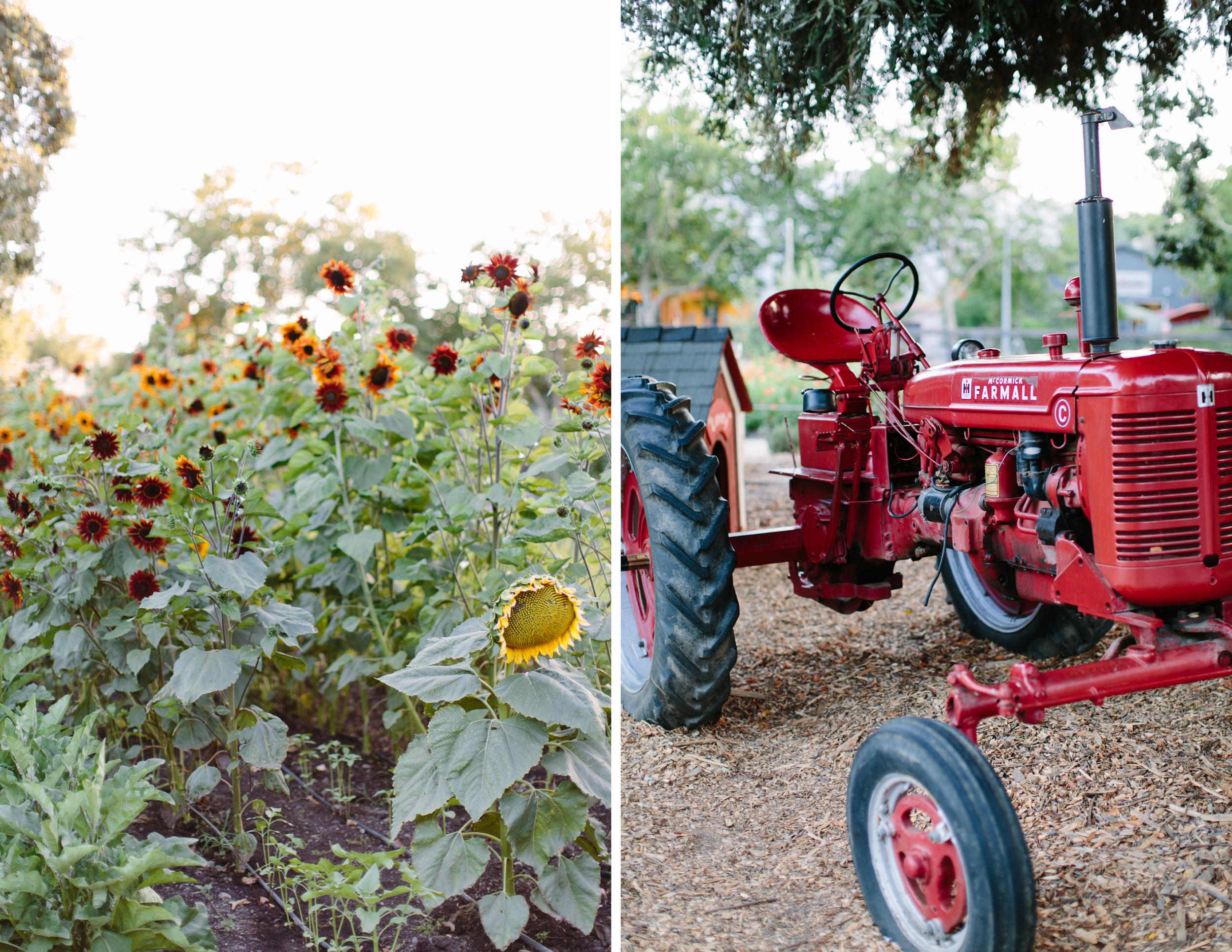 farmstead st helena wedding 8.jpg