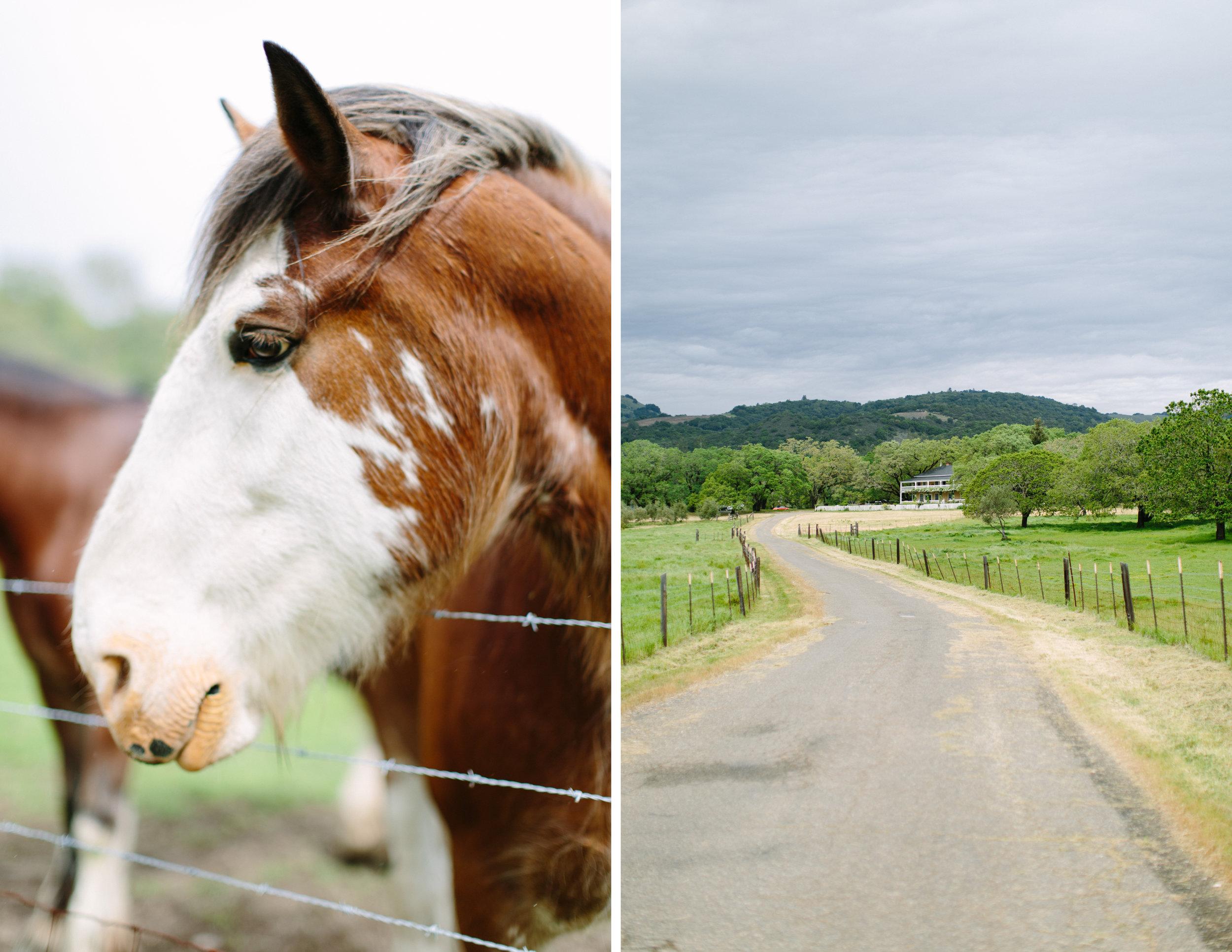 beltane ranch sonoma elopement 1.jpg