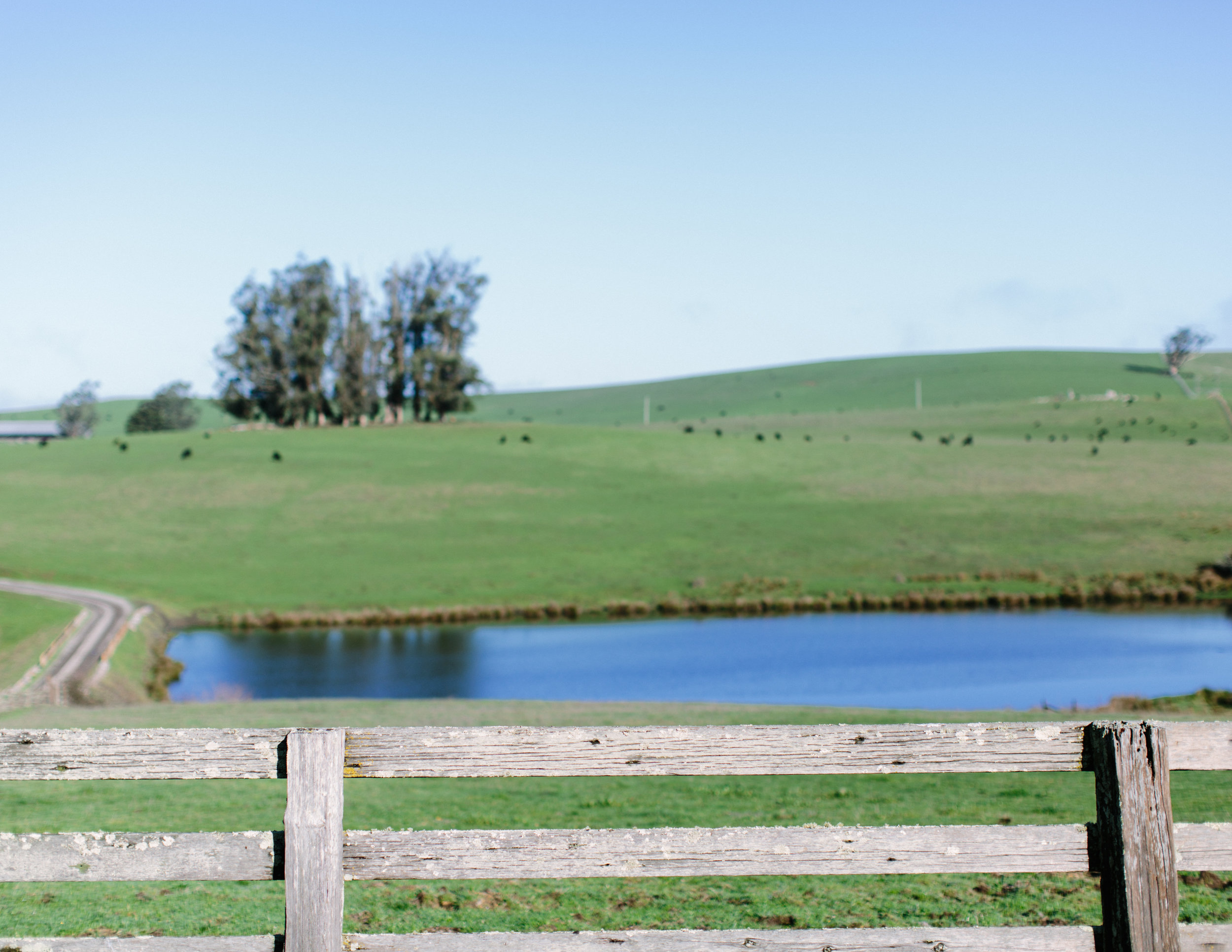 the haven at tomales wedding 1.jpg